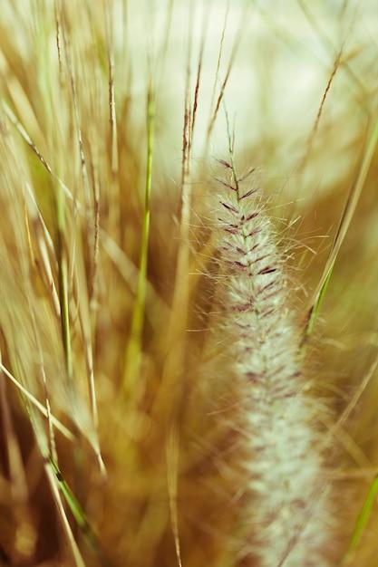Textur der nahaufnahme pflanzen Kostenlose Fotos