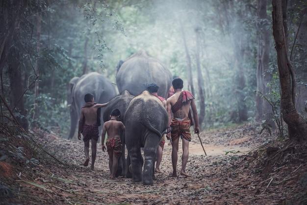 Thailänder sind mahout-elefanten für kontrollelefanten und für den tourismus mit elefanten Premium Fotos