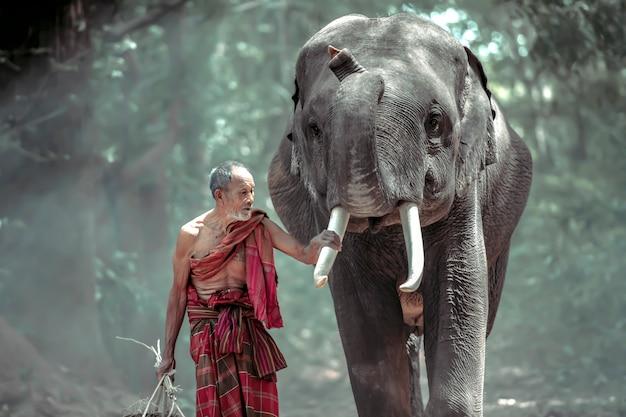 Thailändischer alter mann, der nach hause mit elefanten geht, nachdem die arbeit vom wald erledigt ist Premium Fotos