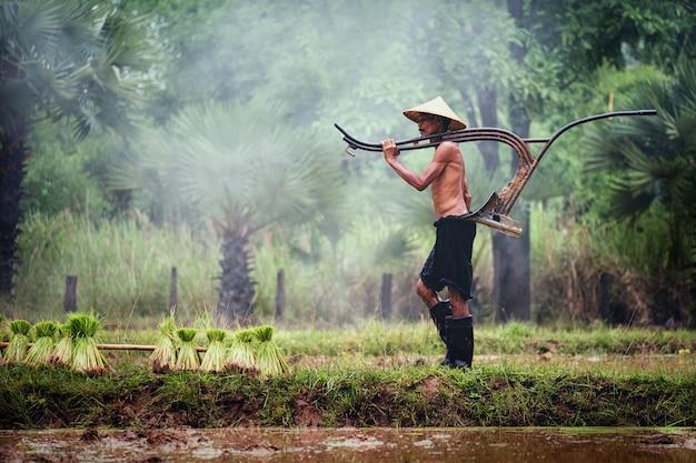 Thailändischer bauer arbeitet auf dem reisgebiet Premium Fotos
