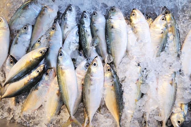 Thunfisch auf eisverkauf im meeresfrüchtemarkt Premium Fotos