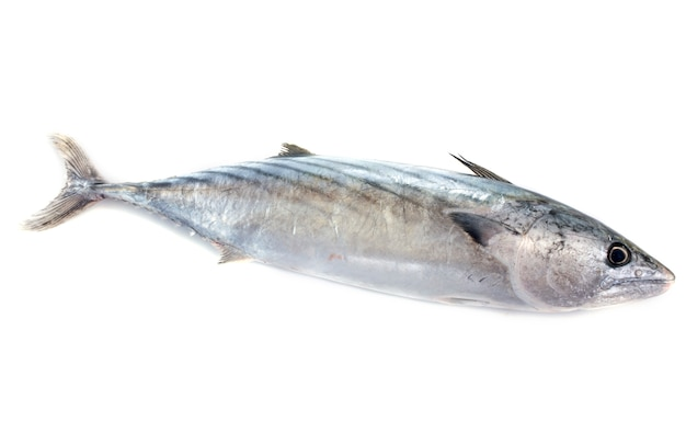 Thunfisch Premium Fotos