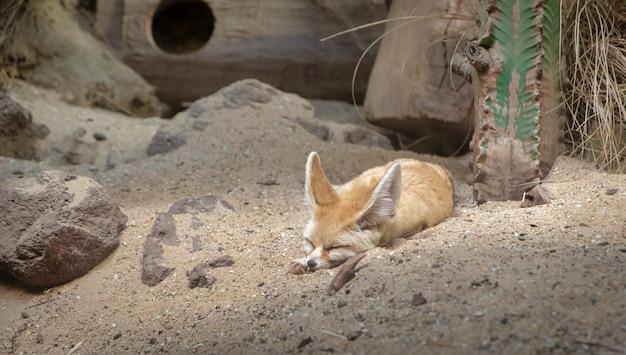 Tier im amsterdamer zoo Premium Fotos