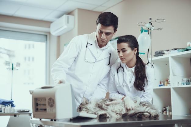 Tierärzte, die kranken cat ultrasound scan überprüfen. Premium Fotos