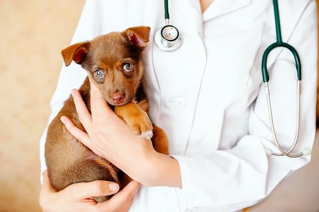 Tierarzt, der einen netten hund überprüft Premium Fotos