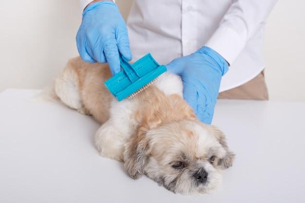 Tierarzt, der pekingese-hundehaar kämmt und reinigungsverfahren in der tierklinik durchführt Kostenlose Fotos