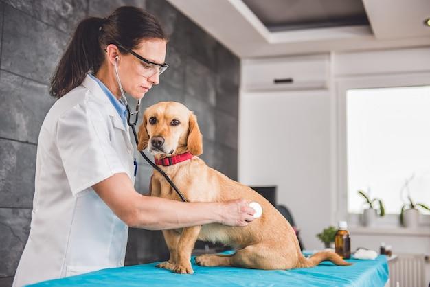 Tierarzt untersuchen hund Premium Fotos