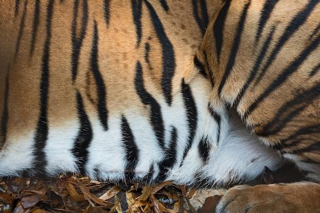 Tiger hautstruktur. Premium Fotos