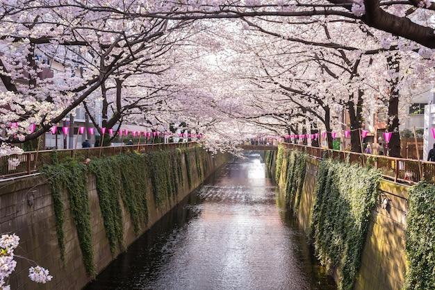 Tokyo, japan bei meguro canal in der frühjahrssaison. Premium Fotos