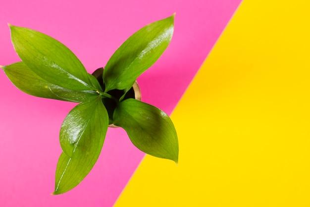 Topfpflanze auf mehrfarbigem hintergrund Kostenlose Fotos