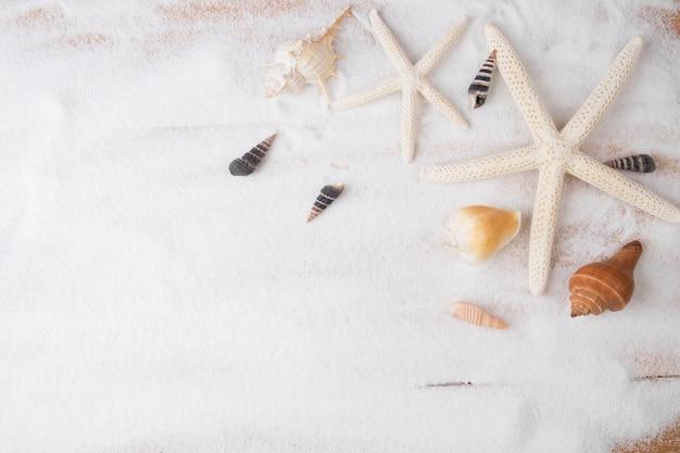 Topview sommer hintergrund. sandstrand mit vielen muscheln und seesternen. vintage-ton, retro-filter-effekt, soft-fokus, low-light (selektive fokus) Kostenlose Fotos