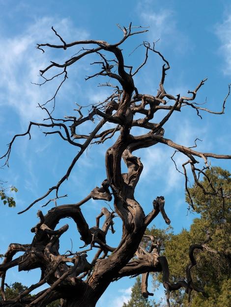 China Baum