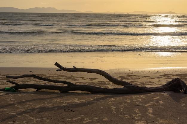 Toter baum logon ein sandiger strand mit sonnenunterganghintergrund Premium Fotos
