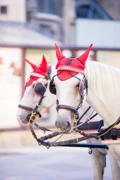 Traditioneller pferdekutscher fiaker in wien österreich Premium Fotos