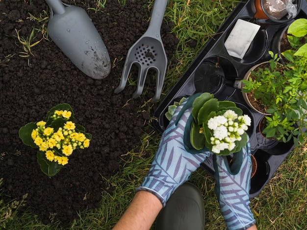 Tragende handschuhe des gärtners, die schösslinge halten, um im garten zu pflanzen Kostenlose Fotos