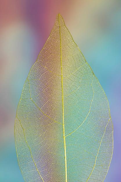 Transparentes klares farbiges herbstblatt Kostenlose Fotos