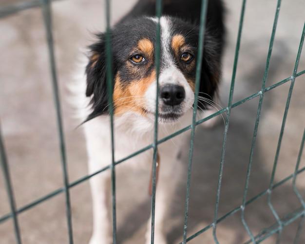 Trauriger rettungshund hinter zaun am adoptionsschutz Kostenlose Fotos