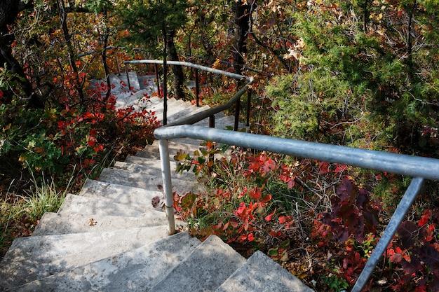 Treppen führen hinunter durch den wald. Premium Fotos
