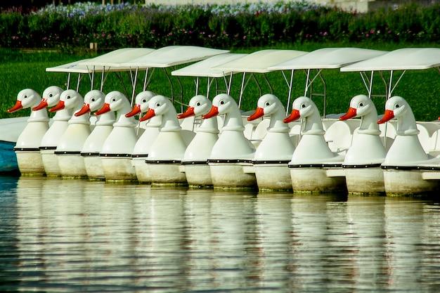 Tretboote, die im wasser am park schwimmen. Premium Fotos