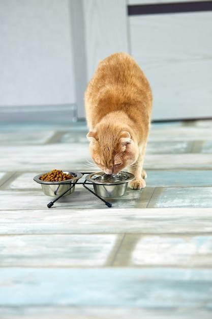 Trinkwasser der entzückenden katze in der metallschale nahe trockenem knusperfutter drinnen zu hause Premium Fotos