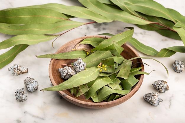 Trockene eukalyptusblätter. kräuterkunde, natürliche heilmittel Premium Fotos