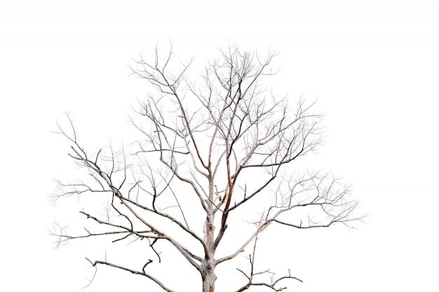 Trockene zweige, trockene bäume auf einem weißen hintergrundobjektkonzept Premium Fotos