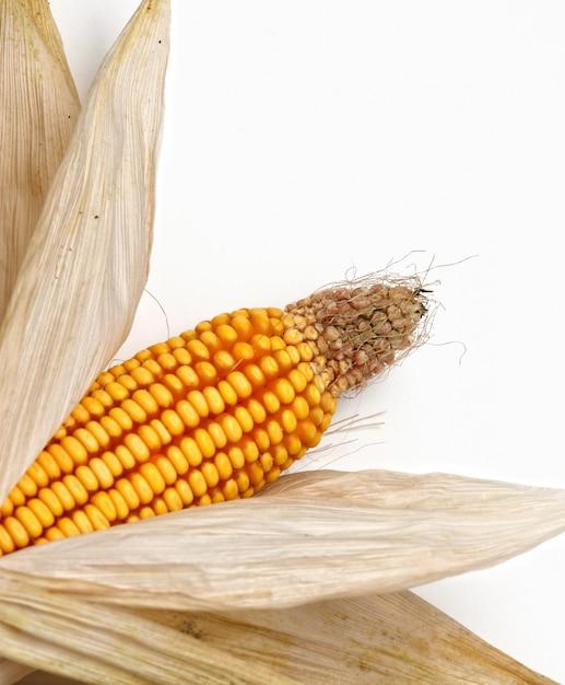 Trockener maiskolben mit blättern Premium Fotos
