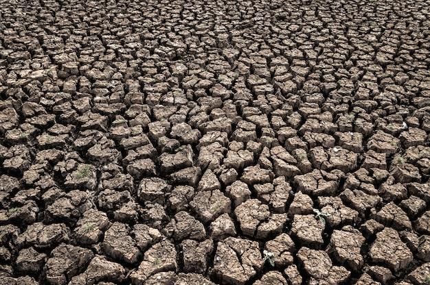 Trockenes land mit trockenem und rissigem boden, globale erwärmung Kostenlose Fotos