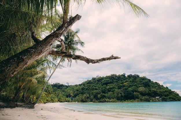 Trocknet baum am strand mit himmel. Premium Fotos