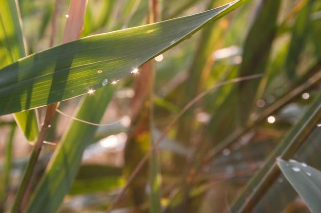 Tropfen des taus auf einem grünen gras Premium Fotos