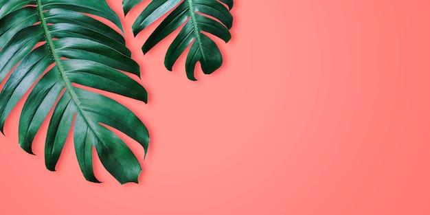 Tropische blätter des philodendron auf minimalem sommer des korallenroten farbhintergrundes Premium Fotos