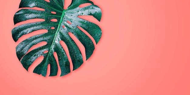 Tropische blätter monstera auf minimalem sommer des korallenroten farbhintergrundes Premium Fotos