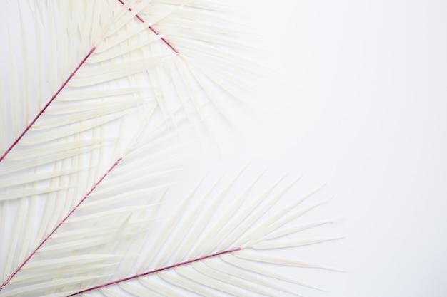 Tropische blätter Kostenlose Fotos