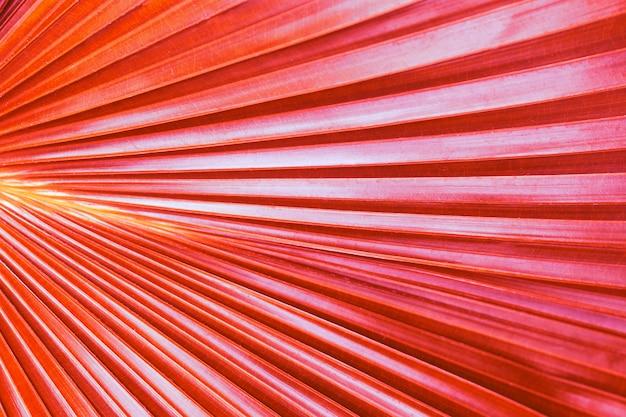 Tropische blatttrendfarbe phasenkoralle, abschluss oben, beschaffenheit, hintergrund Premium Fotos
