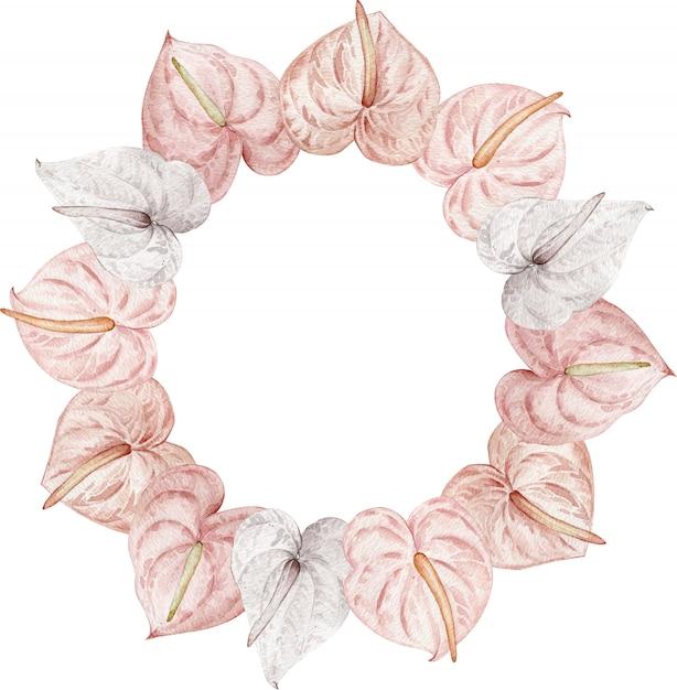 Tropische blumen, erröten rosa und weiße anthurien. handgezeichneter blumenkreisrahmen des aquarells Premium Fotos