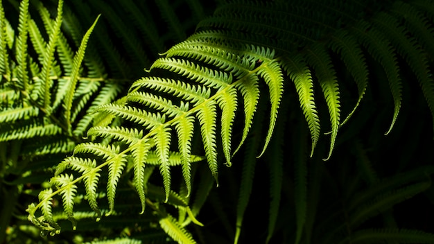 Tropische farnblätter mit schatten Kostenlose Fotos