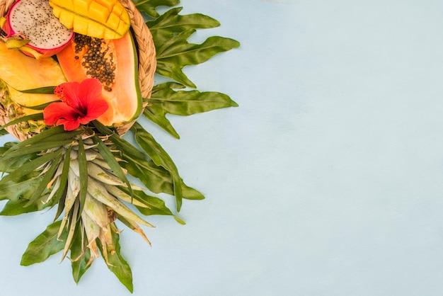 Tropische grüne blätterpalme. sommerhintergrund Premium Fotos