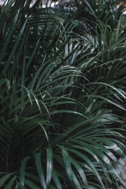 Tropische palmblätter, dschungelblätter, blumenmusterhintergrund Premium Fotos