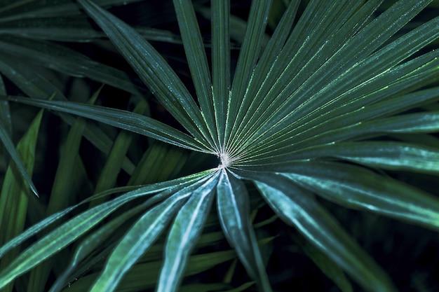 Tropische palmblattbeschaffenheit, dunkelgrünes laub, naturhintergrundbild Premium Fotos