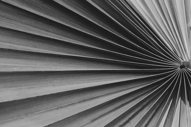 Tropische palmblattbeschaffenheit ist abstrakter hintergrund, schwarzweissfilter Premium Fotos