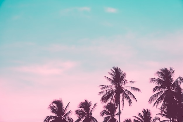 Tropische palmen-kokospalmen auf sonnenuntergangshimmelfackel und bokeh-natur. Premium Fotos