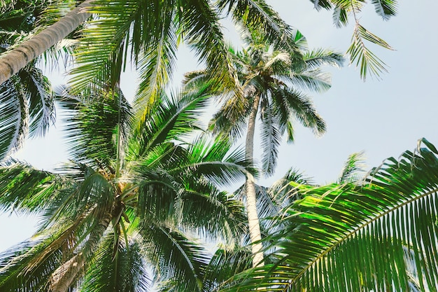 Tropische palmen Premium Fotos