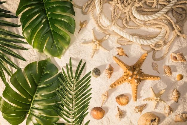 Tropische pflanzen und muscheln Kostenlose Fotos