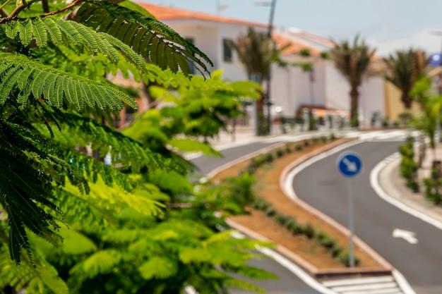 Tropische pflanzenblätter mit unscharfem hintergrund Kostenlose Fotos