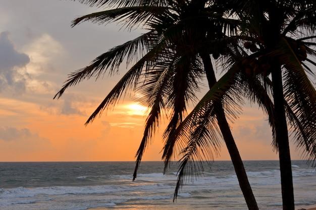Tropische sonnenuntergangsszene mit palmen Premium Fotos