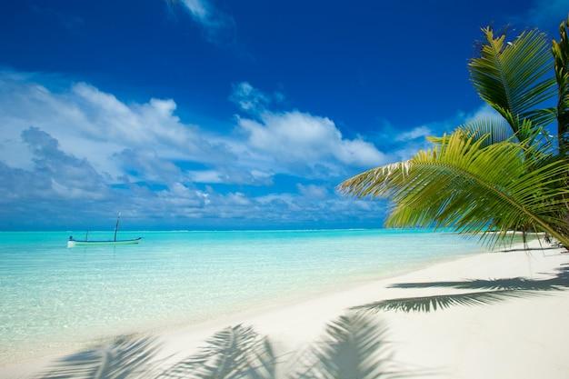 Tropischer strand auf den malediven mit wenigen palmen und blauer lagune Premium Fotos