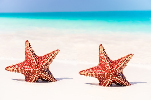 Tropischer weißer sand mit roten seesternen im klaren wasser Premium Fotos