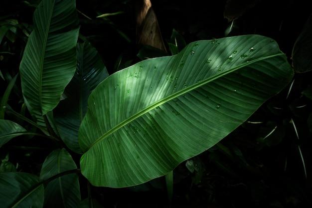 Tropisches blatt der draufsicht mit unscharfem hintergrund Kostenlose Fotos