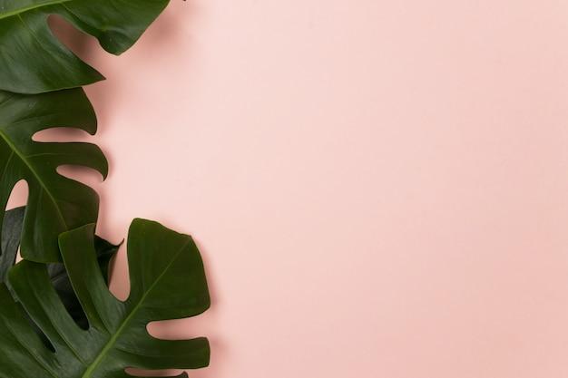 Tropisches palmblatt auf rosa hintergrund Premium Fotos