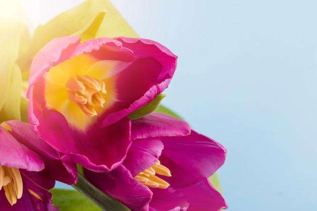 Tulpen im freien Kostenlose Fotos